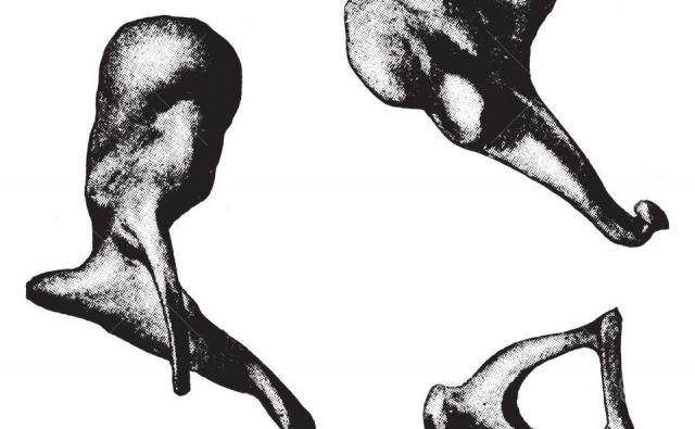 Ušesne koščice, kladivce, nakovalce in stremence, sodijo med najmanjše kosti v človeškem telesu. Foto: Shuttterstock