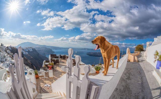 Zmagovalec razpisa bo svojega psa odpeljal na luksuzne počitnice. FOTO: Shutterstock