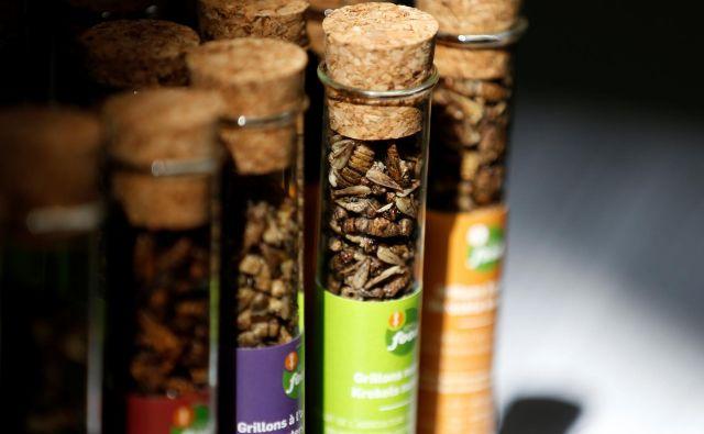 V Sloveniji prodaja žuželk ali proizvodov iz njih za prehrano ljudi ni dovoljena. FOTO: Francois Lenoir/Reuters