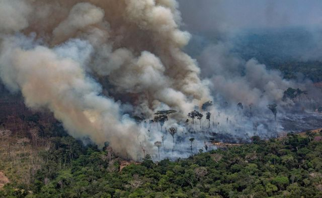 Brazilski deževni gozd gori. FOTO: Victor Moriyama/Afp