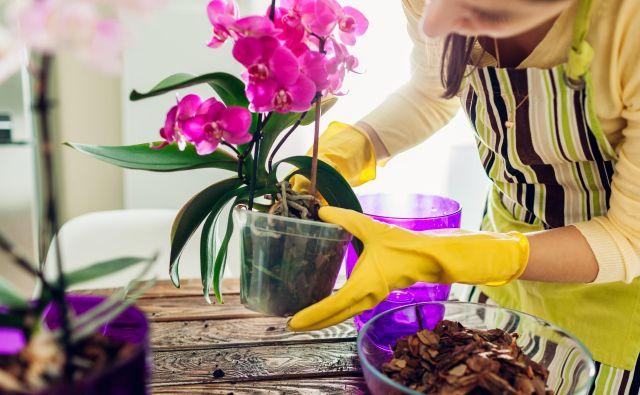 Orhideje niso zahtevne, a vseeno potrebujejo vašo pozornost. FOTO: Shutterstock