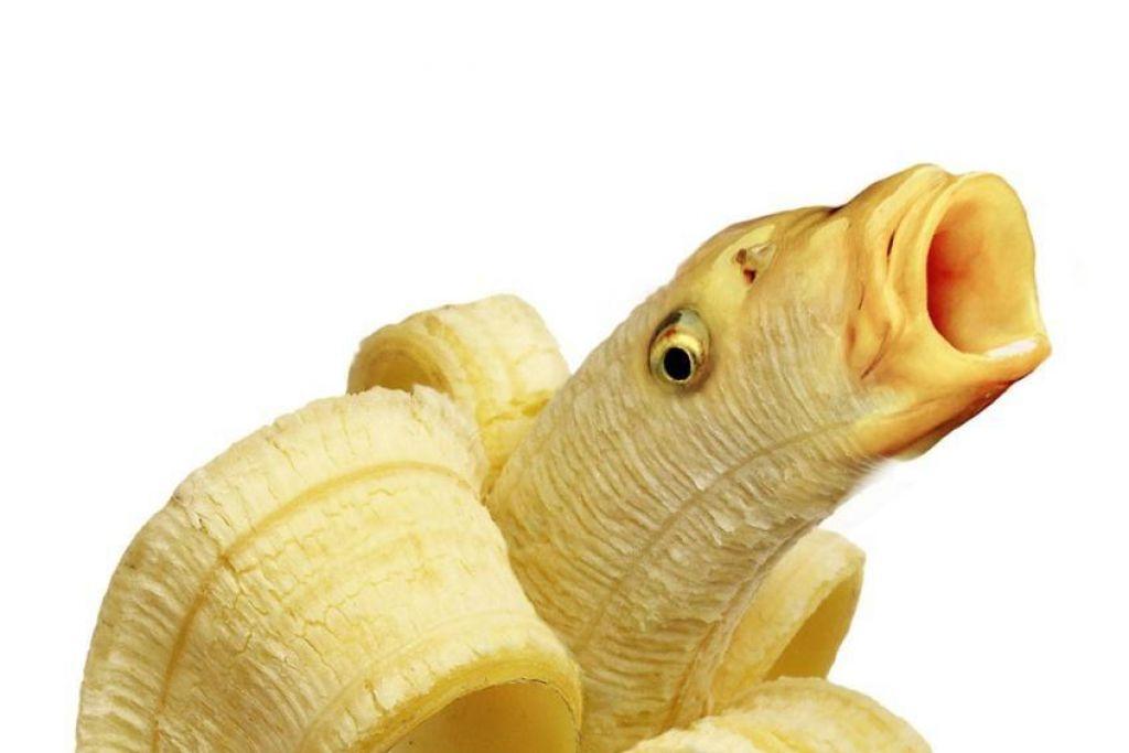 FOTO:Za srečo banane v čokoladi, nad brezvoljnost z ribami