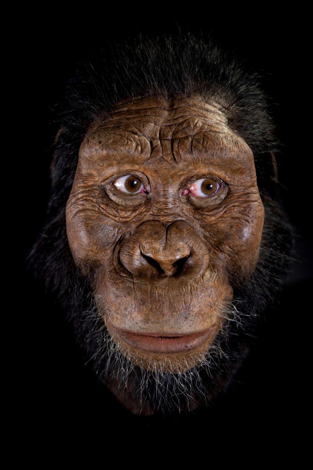 FOTO:Odkrili lobanjo našega najstarejšega prednika