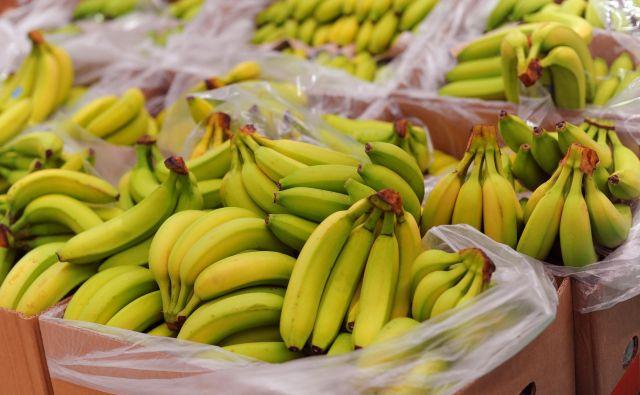 Podjetnik, ki je pri poslu z bananami prejel naknadno odločbo o plačilu več kot 240 tisoč evrov DDV, je vse od leta 2013 bil bitko s finančno upravo; njegov primer je prišel vse do Sodišča EU. Zdaj bo denar dobil nazaj. Tudi takšni primeri naj bi vplivali na izbiro novega prvega dacarja v državi. FOTO: Arhiv Dela
