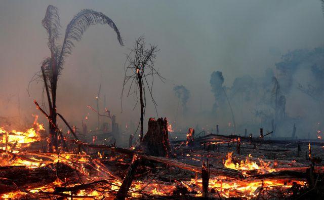 Zaradi brazilskih požarov se je pred kratkim diplomatsko črno-belo zaostrilo med uradnima Brasilio in Parizom. Foto: Ricardo Moraes/Reuters