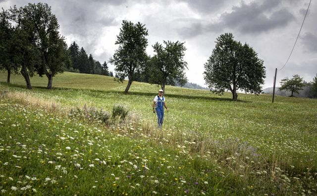 Ob razpravi o regionalizaciji pogosto slišimo, da je eden največjih problemov Slovenije vrtičkarstvo – zapiranje v malenkostne ograde neposrednih osebnih interesov brez zanimanja za širše dobro. FOTO: Voranc Vogel/Delo