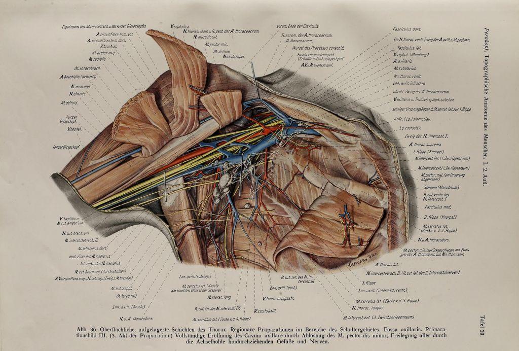FOTO:Anatomski atlas, ki še 80 let po izidu buri duhove