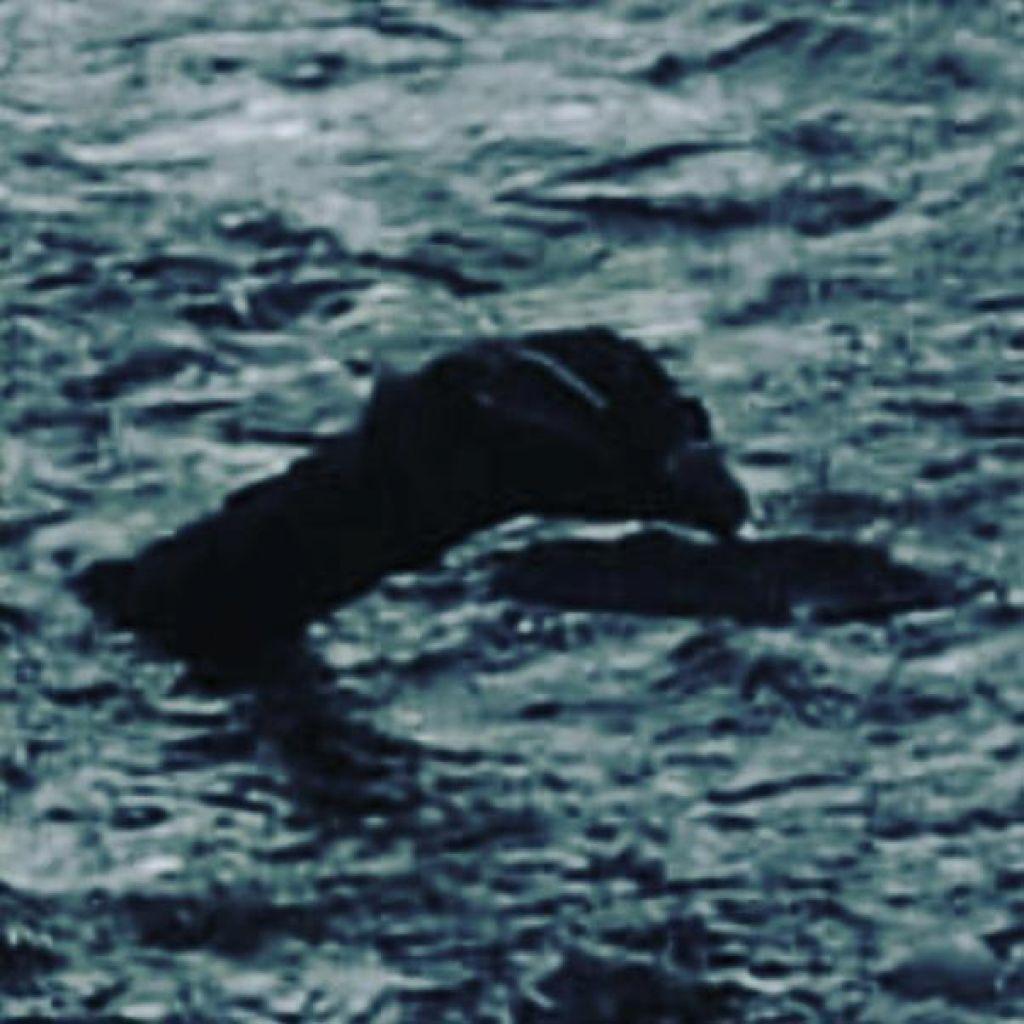 Je pošast iz Loch Nessa le velikanska jegulja?