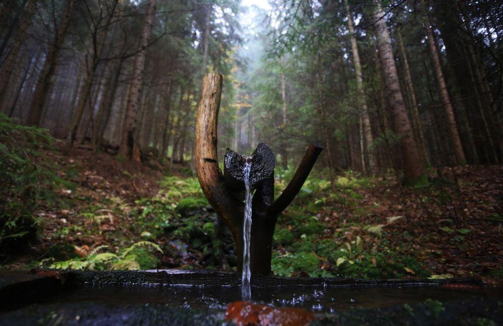 FOTO:Do gozdov prihodnosti le z mreženjem znanja