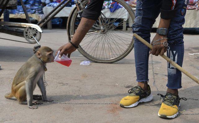 Na ulici v New Delhiju lastnik svoji opici daje piti mrzlo pijačo na vroč soparen poletni dan. FOTO: Sajjad Hussain/AFP