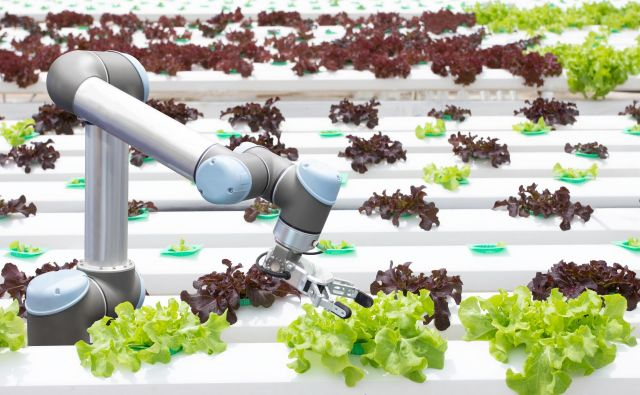 Vegebot je pri pobiranju solate počasnejši od ljudi. FOTO: Shutterstock