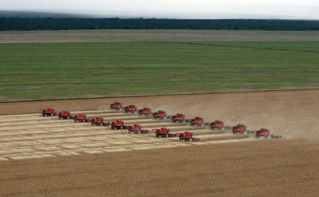 Kitajske družbe so ta teden kupile več kot 600.000 ton ameriške soje. Foto: Reuters