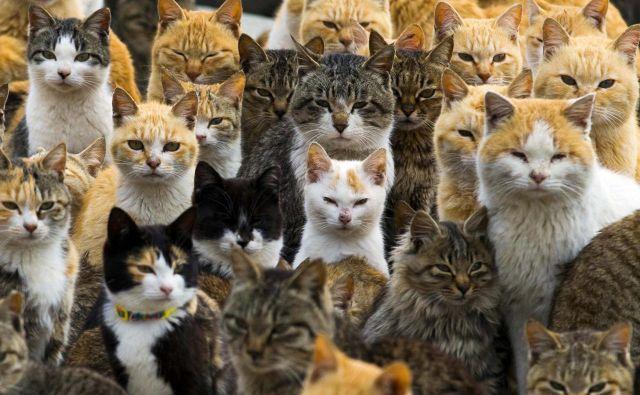 Pogledaš mačko, in si misliš svoje ... Foto: Reuters