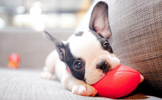 Ste se kdaj vprašali, zakaj kosmatinci to počnejo? FOTO: Shutterstock