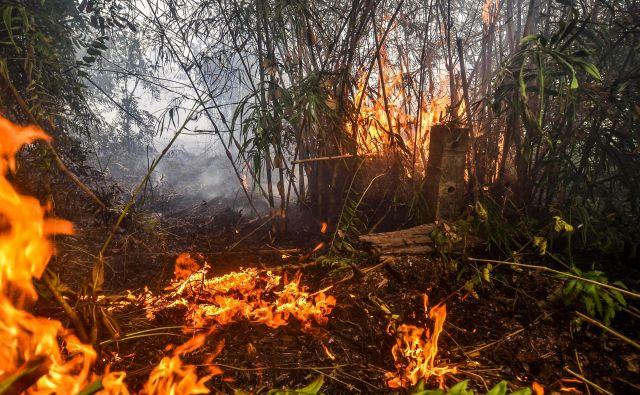 V Indoneziji tudi zdaj gori. Zapreti so morali letališča in šole. FOTO: Wahyudi/AFP