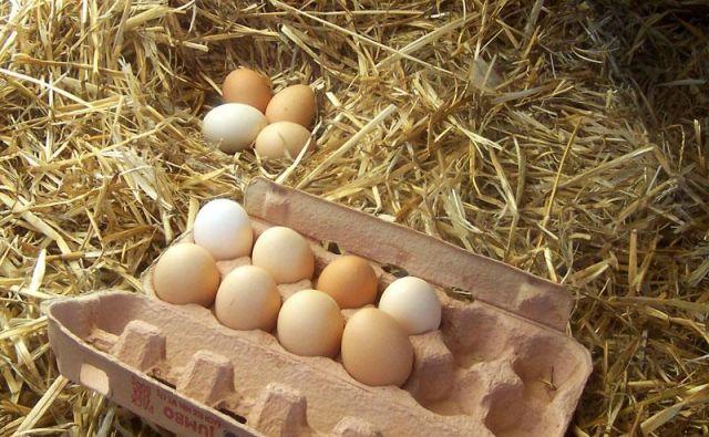Druga študija je prav tako primerjala<strong> jajca </strong>kokoši, ki so se ali gibala na prostem ali v zaprtem prostoru, vendar se je osredotočala na količino vitamina D3. Foto: Shutterstock