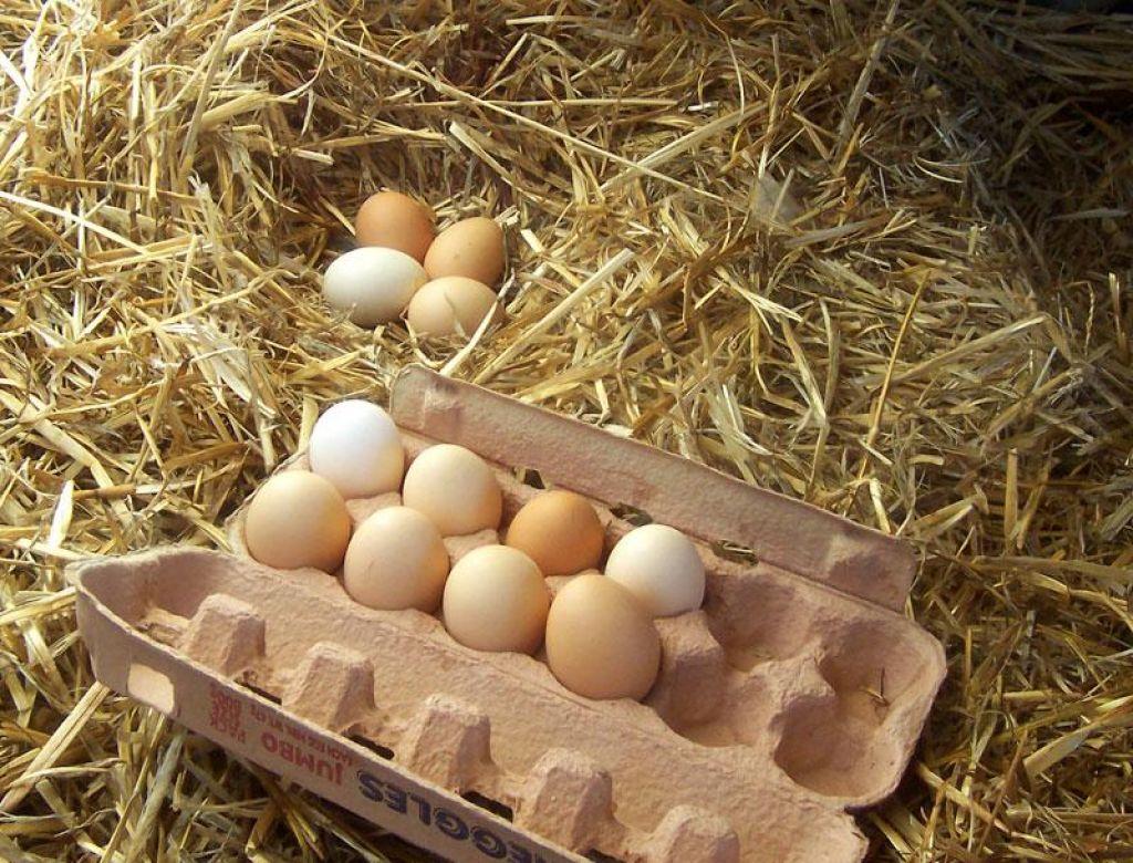 So si jajca res podobna kot jajce jajcu