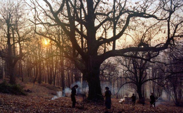 Zgodbe iz kostanjevih gozdov je dobil 11 nagrad. Foto Arhiv Nosorogi
