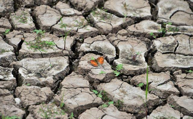 Obdobje med letoma 2015 in 2019 je bila najtoplejša petletka, odkar so pred 150 leti začeli beležiti temperatureFOTO: Orlando Sierra/AFP