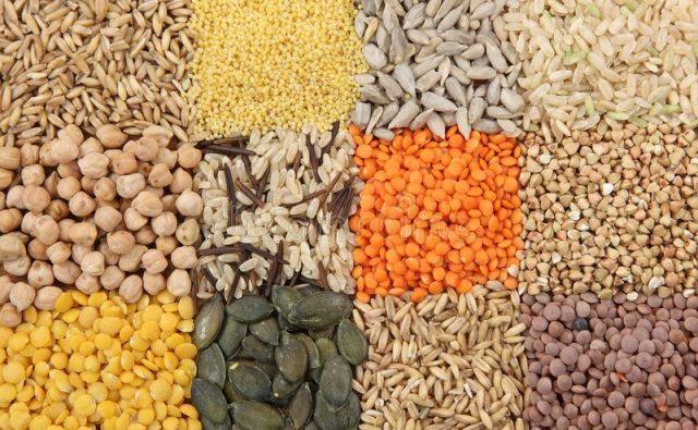 Nikolaj Vavilov je ustvaril dotlej največjo zbirko semen z več stotisoč sortami. Foto Shutterstock