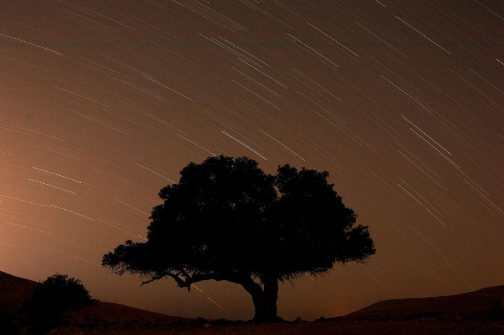 Kot zvezde na nebu
