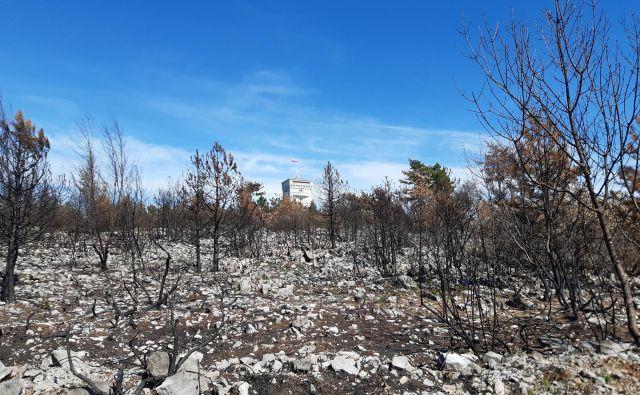 Sanacija po požaru na Cerju bo trajala od 25 do 30 let. Foto Blaž Močnik