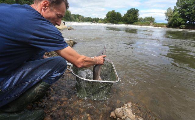 Bolj ko se bodo Zemlja in reke segrevale, slabše bo za organizme. FOTO: Tadej Regent/Delo