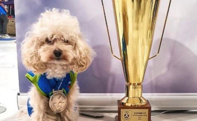 Triletni toy koder Slash je navdušil vse ljubitelje odbojke in občasne gledalce športnih dogodkov. FOTO: Slash The Poodle/Instagram