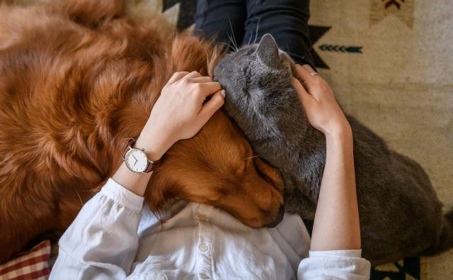 Lotimo se dela, kajti kmalu bo morda vse, o čemer bomo razmišljali ob svetovnem dnevu živali, tragično nemogoče. FOTO: Shutterstock