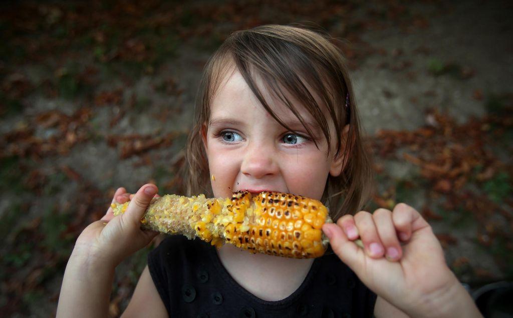FOTO:»Hudobna« koruza na poljih izpodriva pšenico