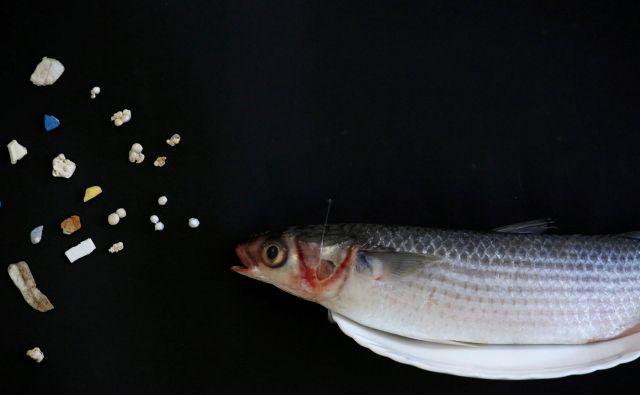 Človek je mikroplastiki izpostavljen prek hrane, vode in zraka. Poleg morske hrane so jo našli še v medu in pivu.<br /> Foto Reuters