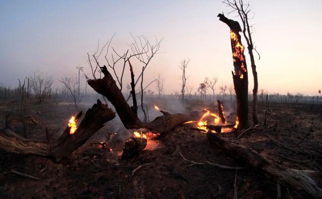 V Boliviji je gozdne požare pomagal pogasiti dež. FOTO: David Mercado/Reuters