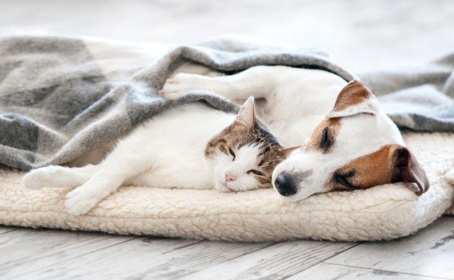 Ste se kdaj vprašali, zakaj so hišni ljubljenčki takšni zaspanci? Foto Shutterstock