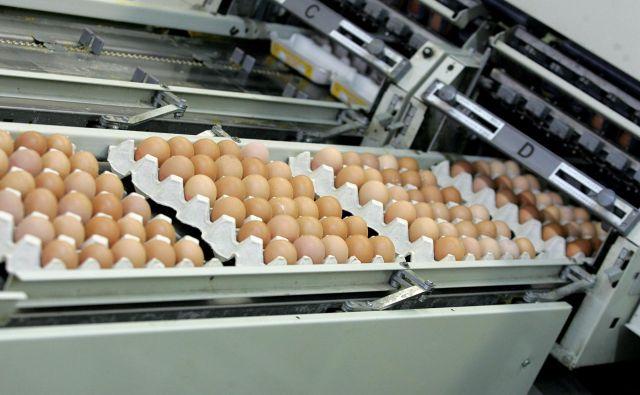 Meja se med drugim ukvarja s prirejo jajc. (fotografija je simbolična) Foto Mavric Pivk