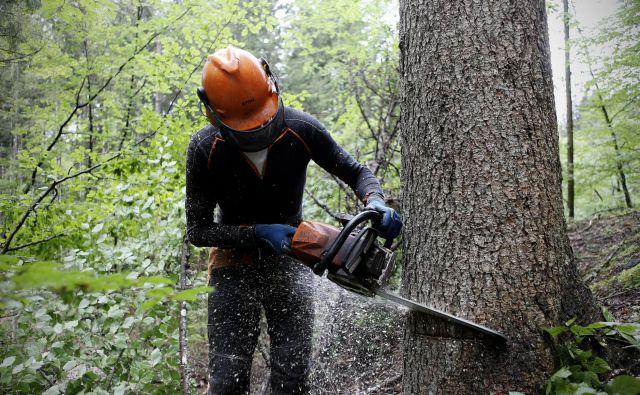 Kakovost gozdarskih del zadnja leta bistveno upada, kar po mnenju strokovnjakov vpliva na zdravstveno stanje gozdov. Foto Blaž Samec