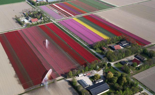 Tipične kmetijske posesti na Nizozemskem. Foto Yves Herman Reuters