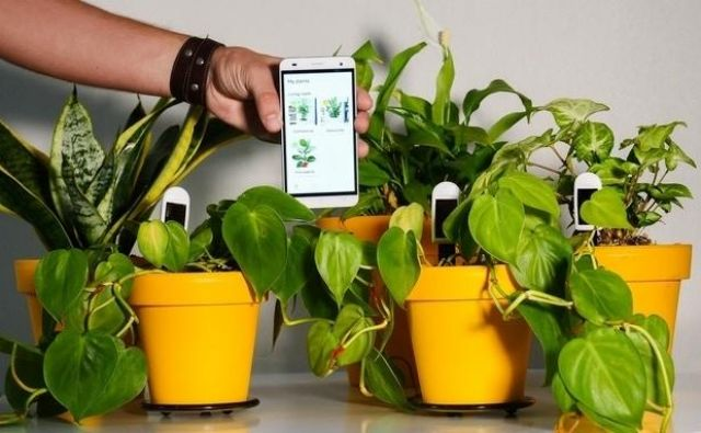 S pametnim senzorjem do zadovoljne rastline. Foto: greensens.de