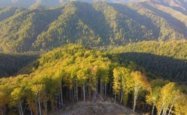 V Romuniji je kar polovica vseh evropskih pragozdov. FOTO: Agent Green