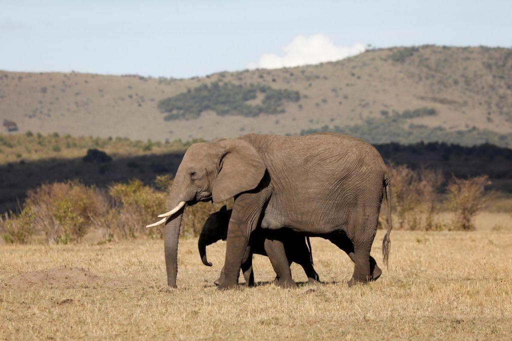 V Zimbabveju do smrti sestradalo najmanj 55 slonov
