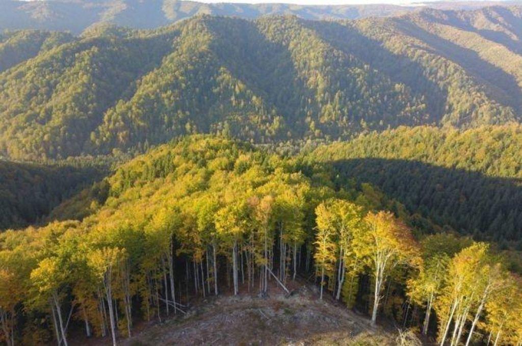 FOTO:Romunska gozdna mafija ubija gozdne čuvaje