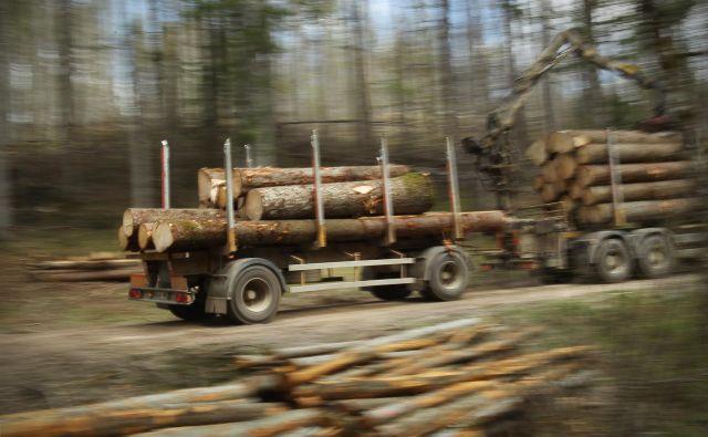 Osumljenci, ki so lani izvedli eno največjih tatvin lesa v državnih gozdovih, še vedno niso za zapahi. FOTO: Jure Eržen/Delo