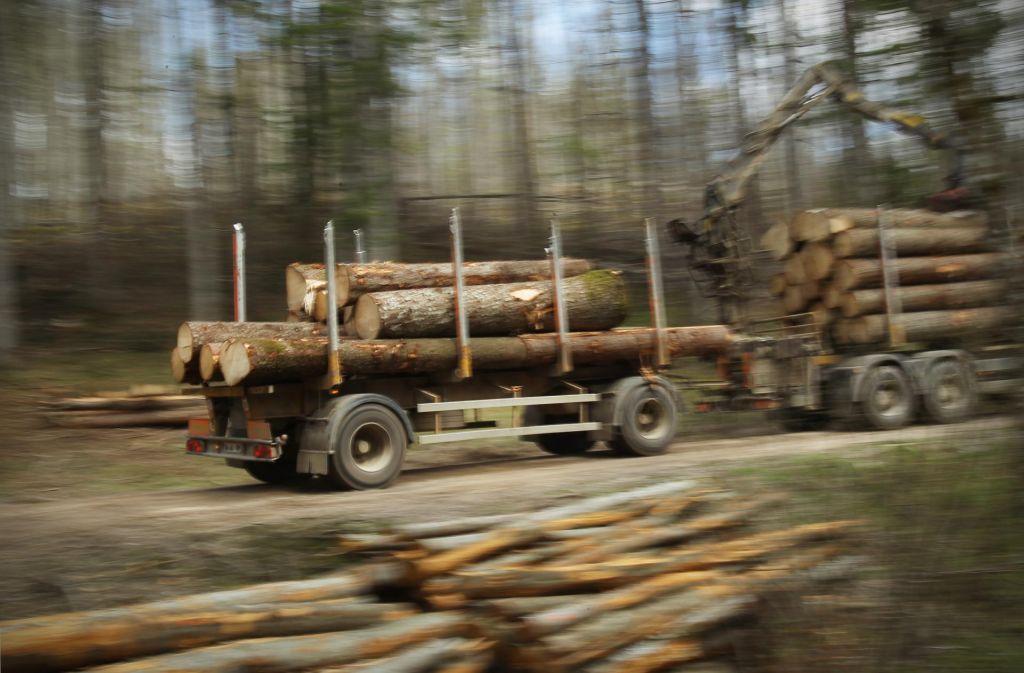 Ali tatovi lesa še naprej gozdarijo?