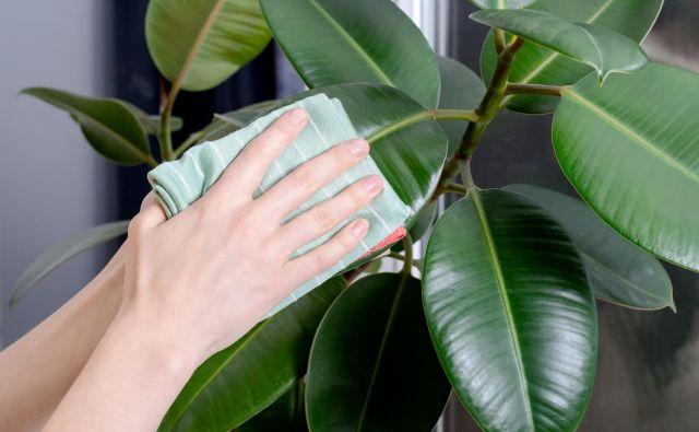 Čiščenje rastlin Foto: Shutterstock