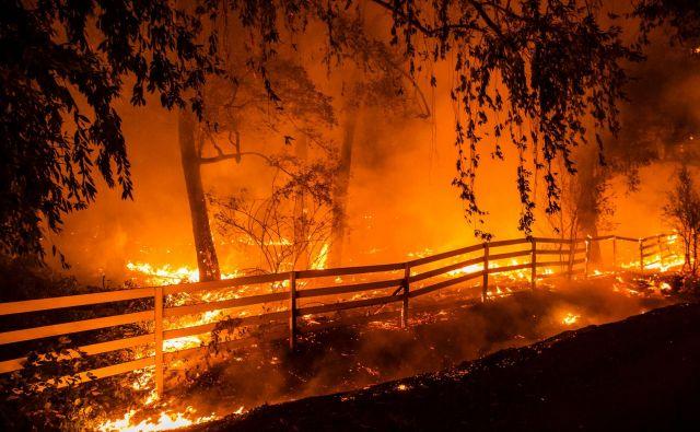 Požar Kincade se je razširil na 260 kvadratnih kilometrov, uničil je 96 zgradb, od tega 40 stanovanjskih hiš, ogroža jih še 80.000. Ukaz za evakuacijo je prizadel 200.000 ljudi predvsem iz mesta Santa Rosa. Foto Philip Pacheco/AFP