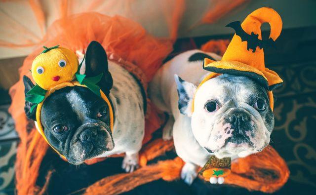 Noč čarovnic Foto: Shutterstock