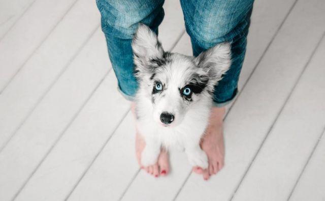 Ljubezen do psov se skriva v krvi. Foto: Shutterstock