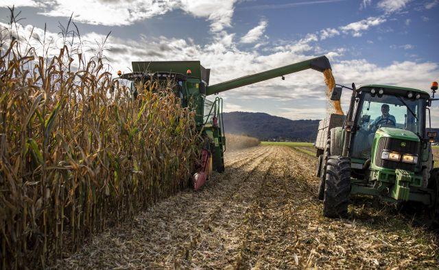 Evropski sistem kmetijskih subvencij je skorumpiran. FOTO: Voranc Vogel/Delo