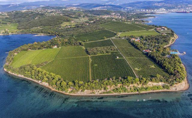 Rdeči križ Slovenije prodaja več kot 16.000 kvadratnih metrov zazidljivo zemljišče na območju Ankarana.