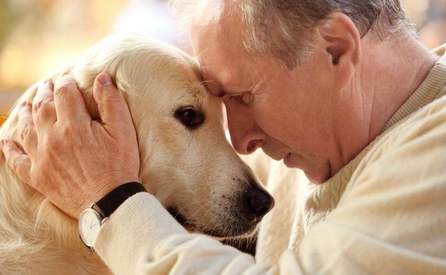 V možganih psov s kognitivno motnjo so ugotovili podobne spremembe kot pri ljudeh z alzheimerjevo boleznijo. Foto Shutterstock