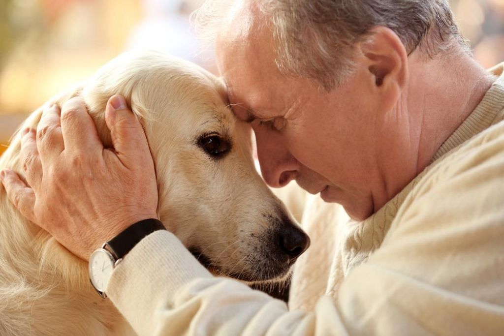 Tudi psi pozabljajo in se izgubljajo